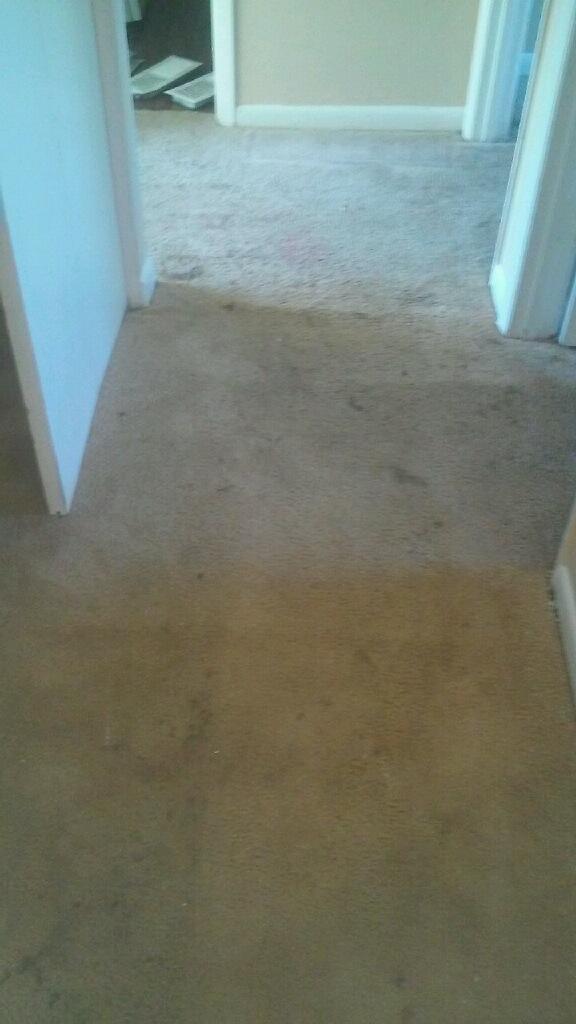 D M Carpet Cleaning - Duluth, GA