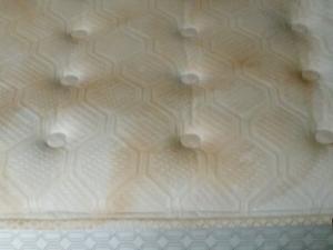 D M Carpet Cleaning - Redan, GA