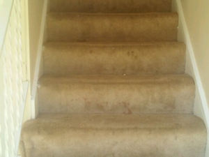 D M Carpet Cleaning - Gresham Park, GA