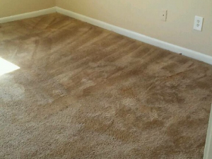 D M Carpet Cleaning - Lawrenceville, GA