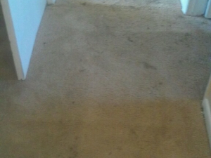 D M Carpet Cleaning - Duluth, GA